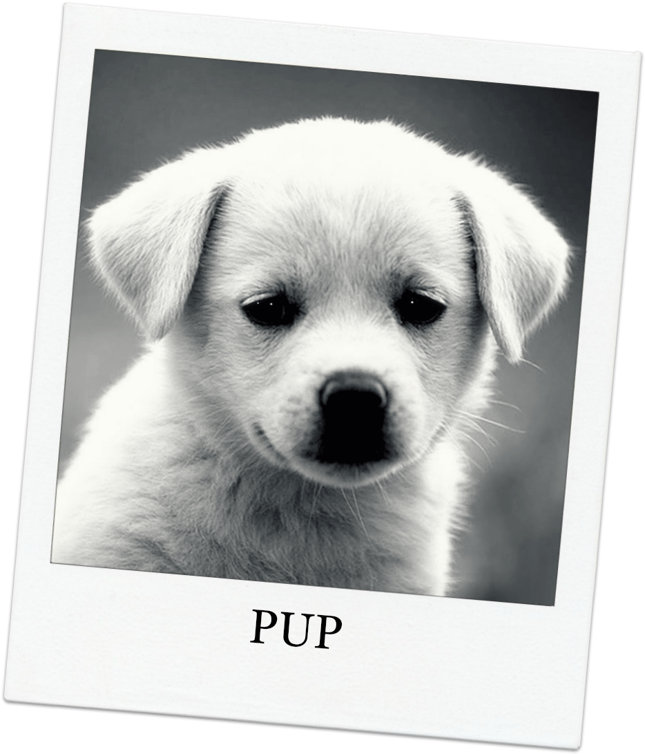 Funny Puppy Dog Picture And Wallpaper Dog Quotes.