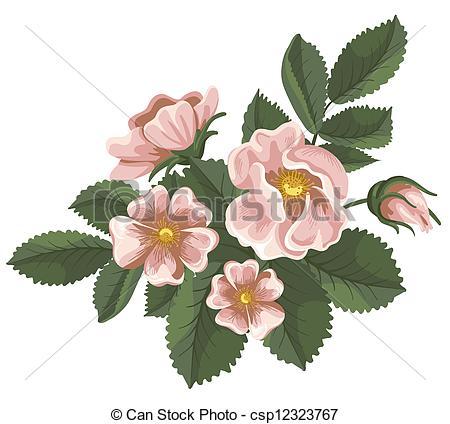 Wild rose Illustrations and Stock Art. 2,243 Wild rose.