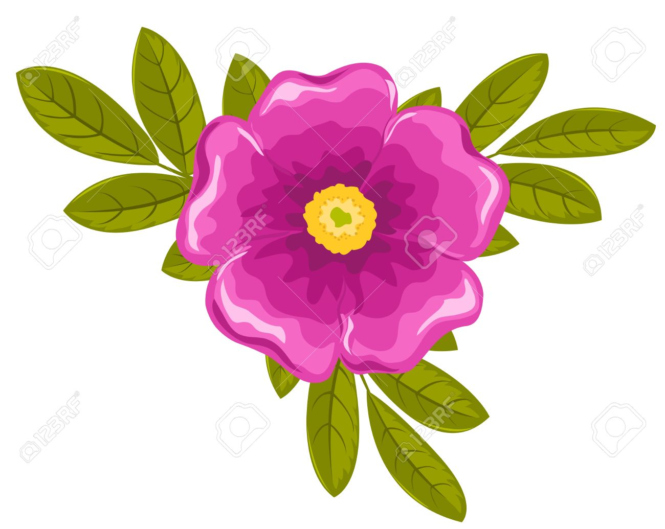 Dogrose Flower And Leaves. Vector Illustration. Isolated On White.