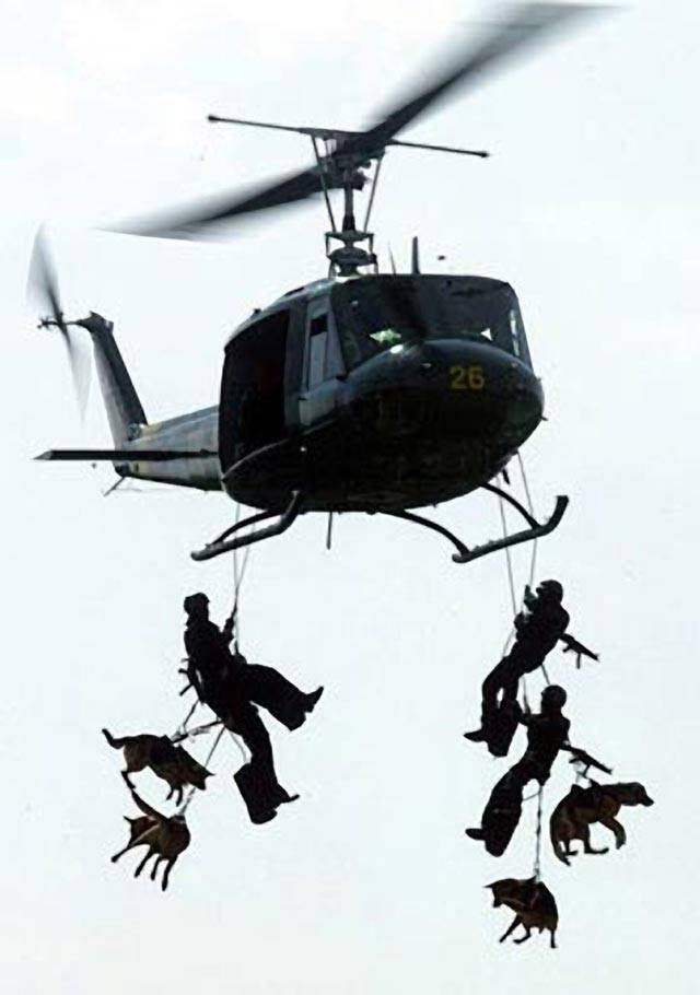 The Dogs Of The Navy Seals Navy Seals #0qbw1W.