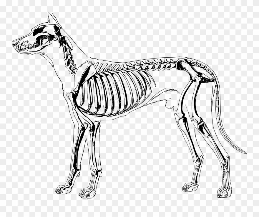 Bones Clipart Sketch Dog.