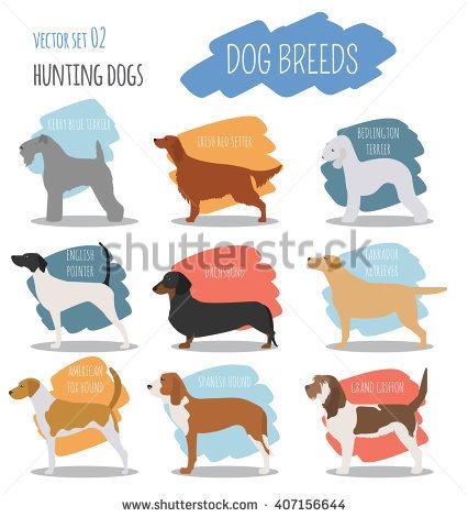 Dog Breeds Stock Photos, Royalty.