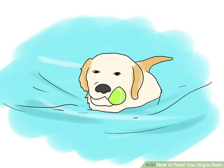Dog clipart swim, Dog swim Transparent FREE for download on.