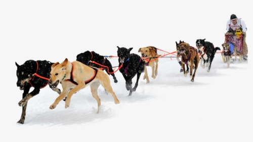 Alaska Clipart Dog Sled.