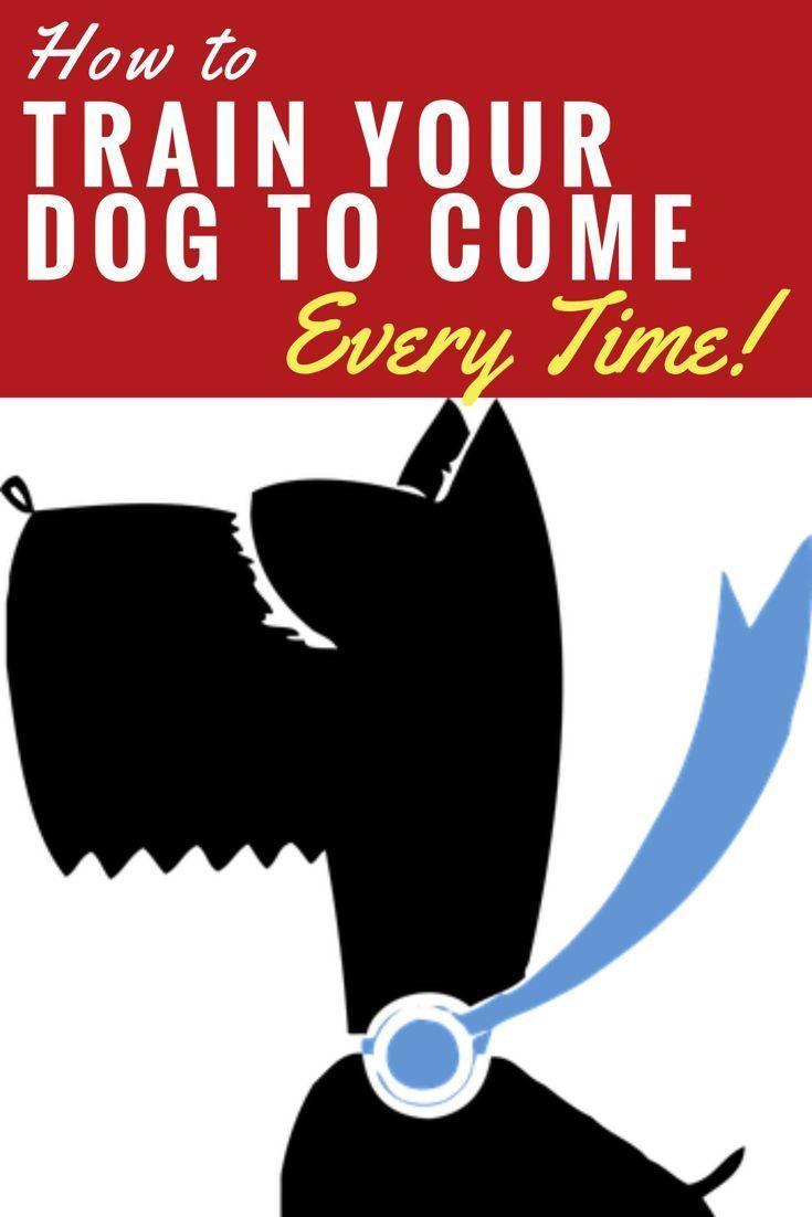 1000+ ideas about Dog Training Tips on Pinterest.