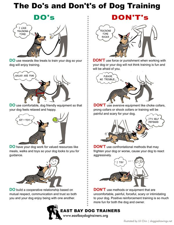 1000+ ideas about Dog Obedience Training on Pinterest.