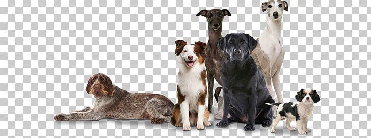German Shepherd Indian Pariah Dog Puppy Australian Cattle Dog Dog.
