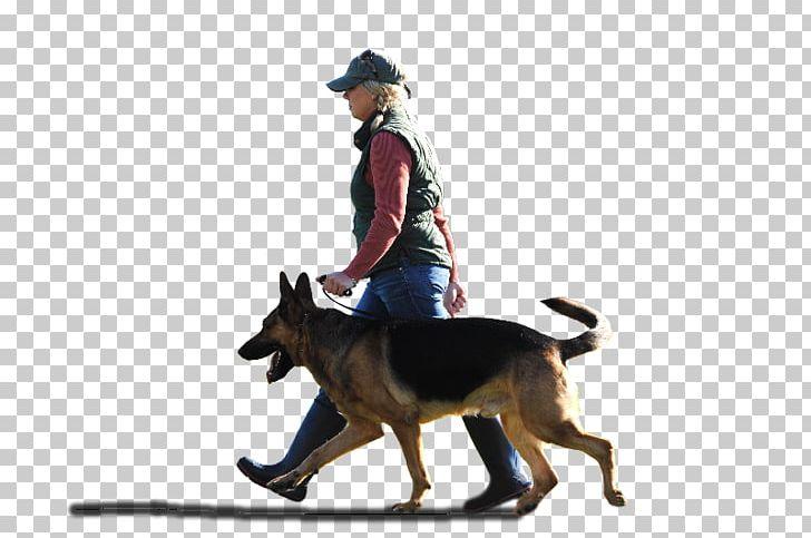 Dog Breed German Shepherd Kunming Wolfdog Dog Training Police Dog.