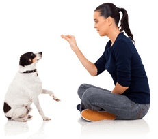 Dog Trainer Courses.