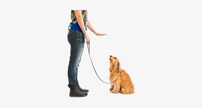 Dog Training Now Dog Training Programs Dog Training.