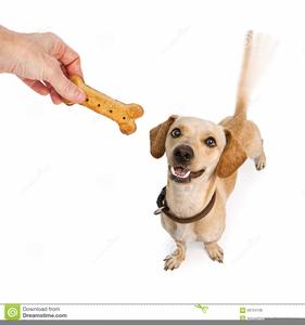 Dog Treat Clipart.