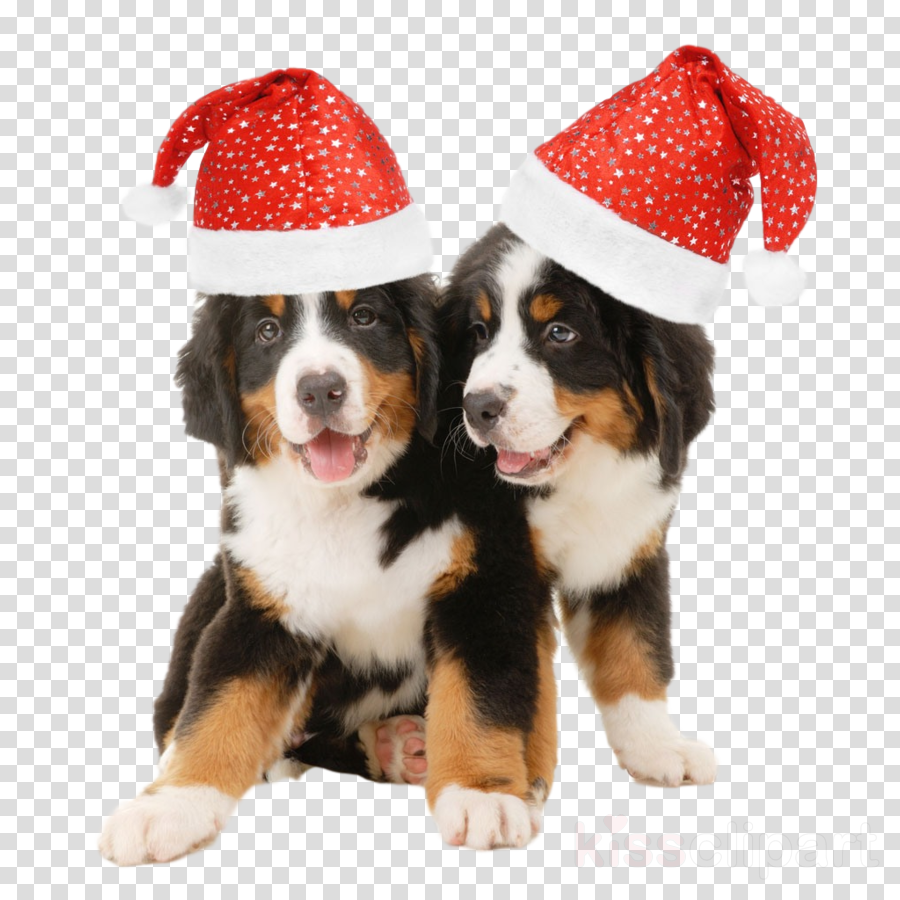 dog santa hat christmas clipart.