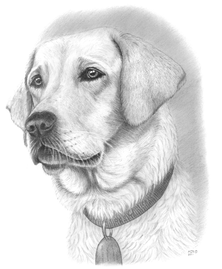Drawings Of Dogs.