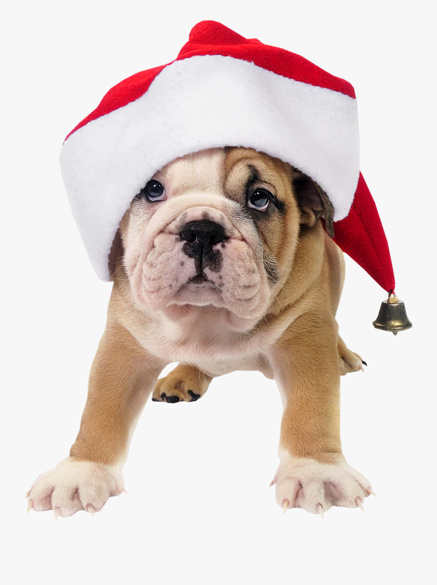 Clip Art Dog In Santa Hat.