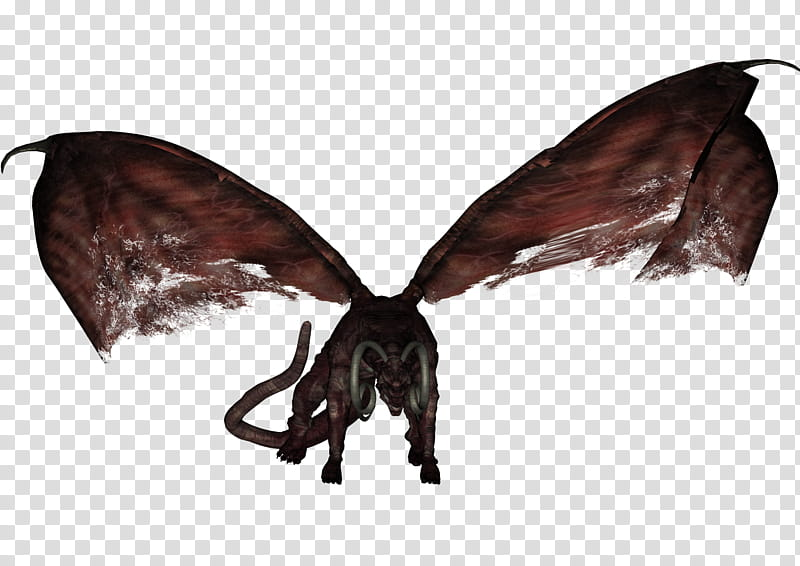 Fire Dragon , black and brown dog with wings transparent.