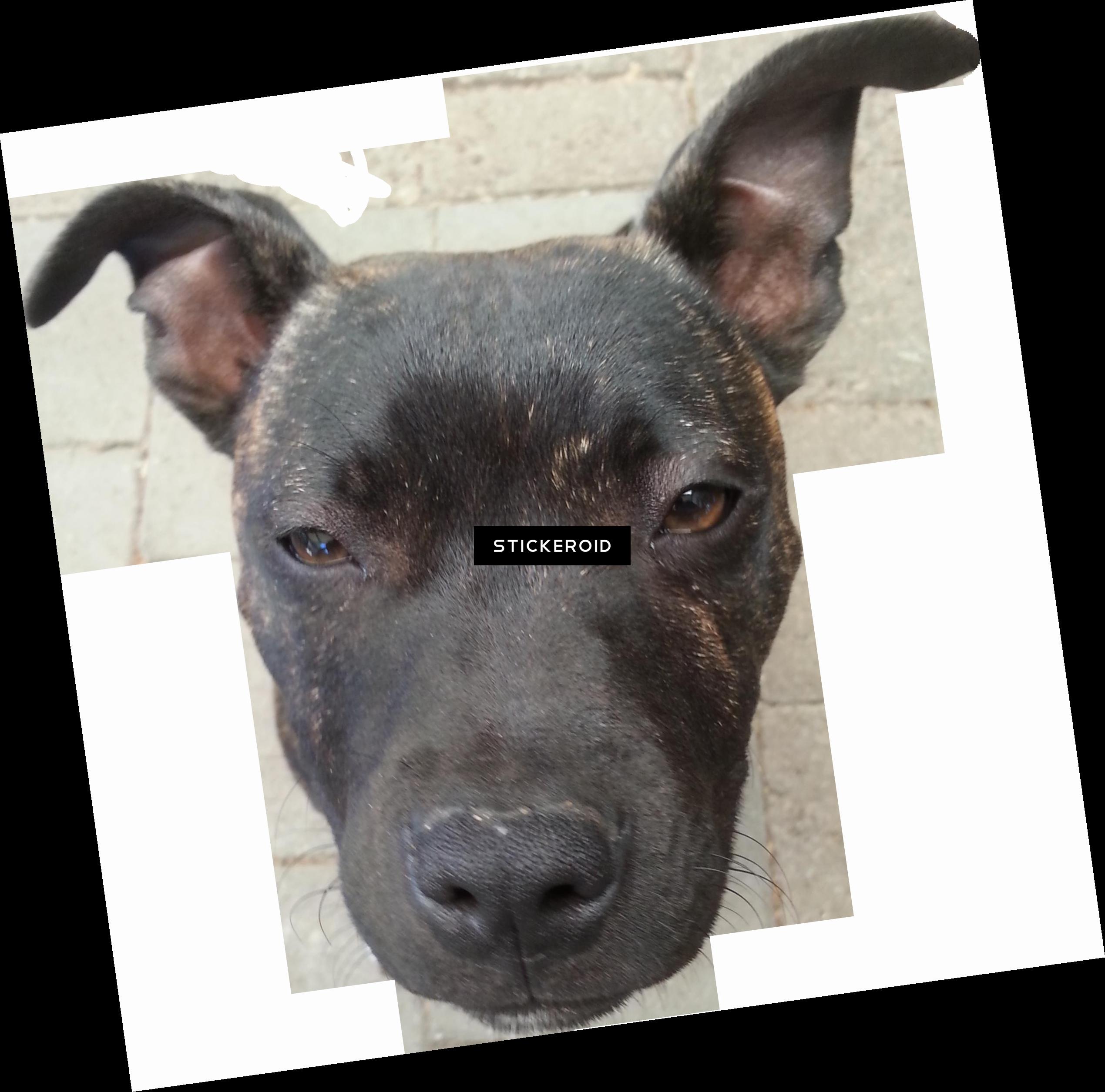 Doge Head.PNG.