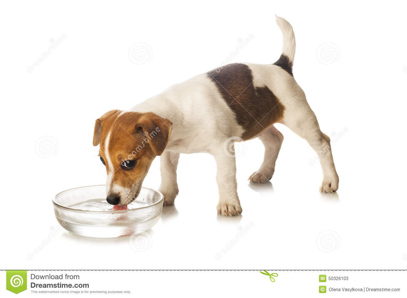 Free Dog Drinking Water Clipart.