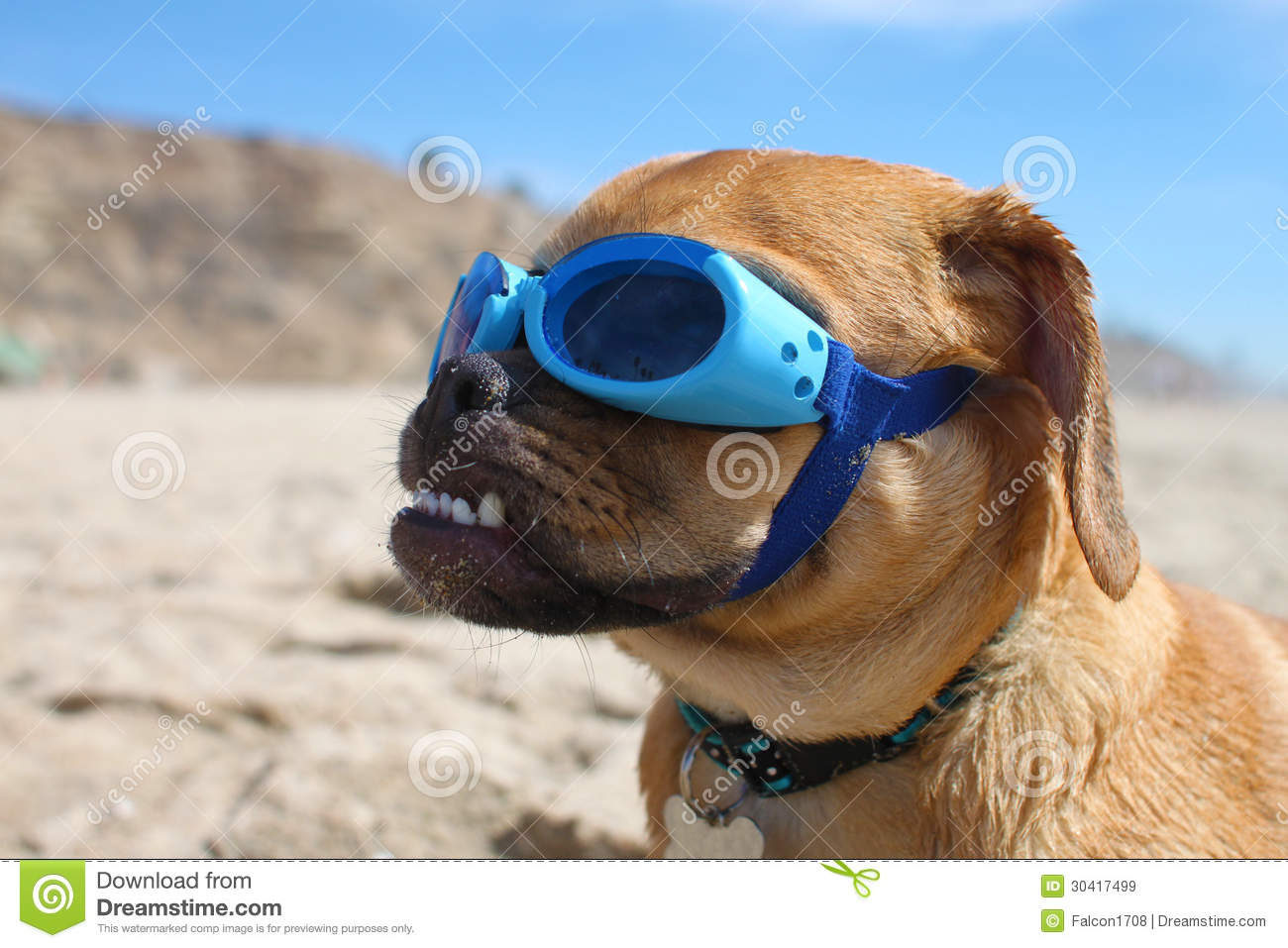 Doggles Royalty Free Stock Images.