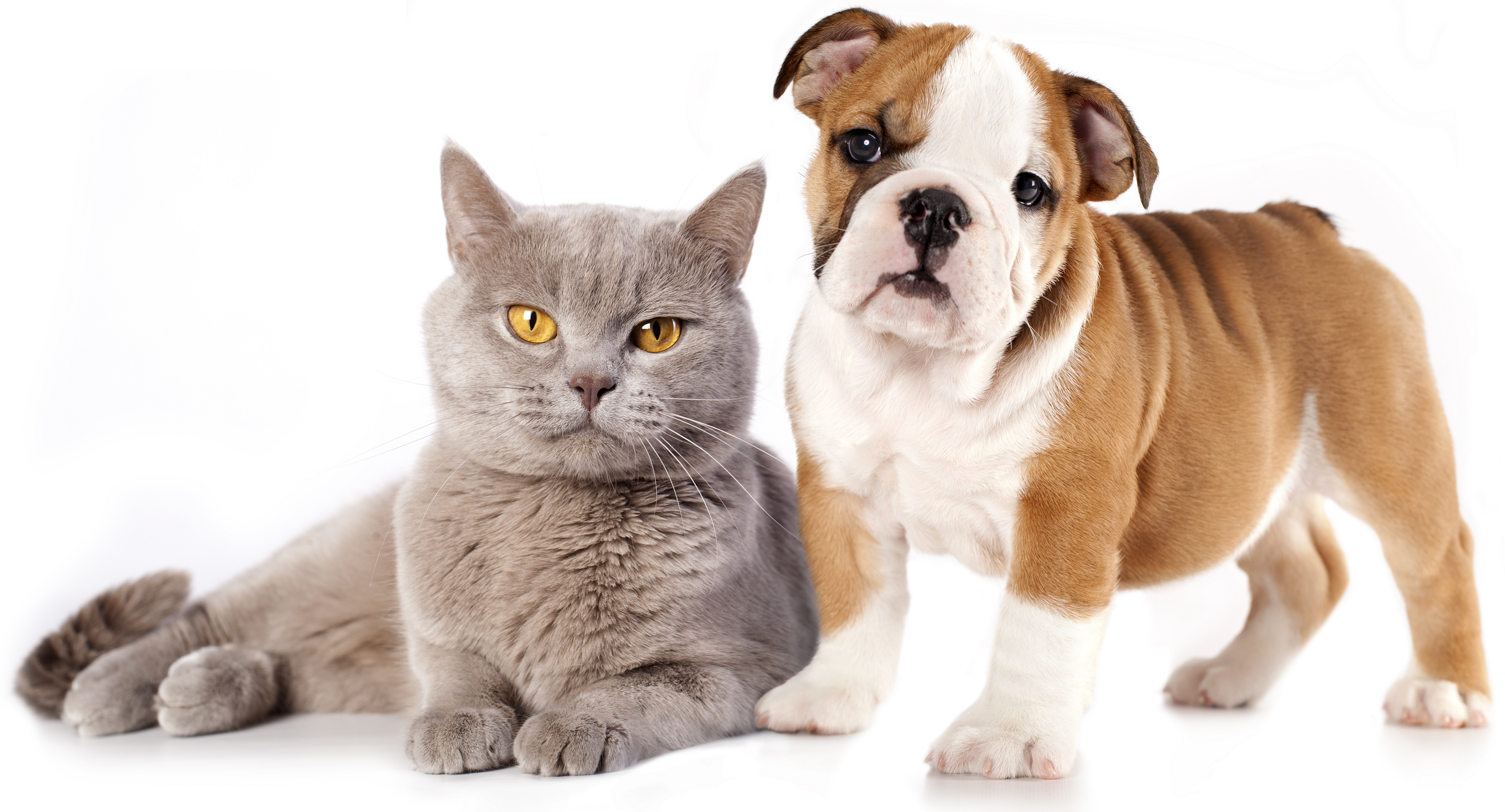 Cats And Dogs PNG HD Transparent Cats And Dogs HD.PNG Images..