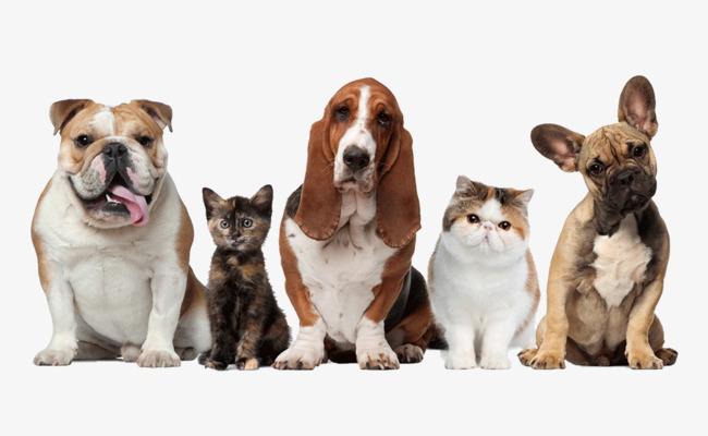 PNG HD Dogs And Cats Transparent HD Dogs And Cats.PNG Images..