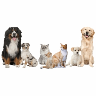Dog And Cat PNG Images.
