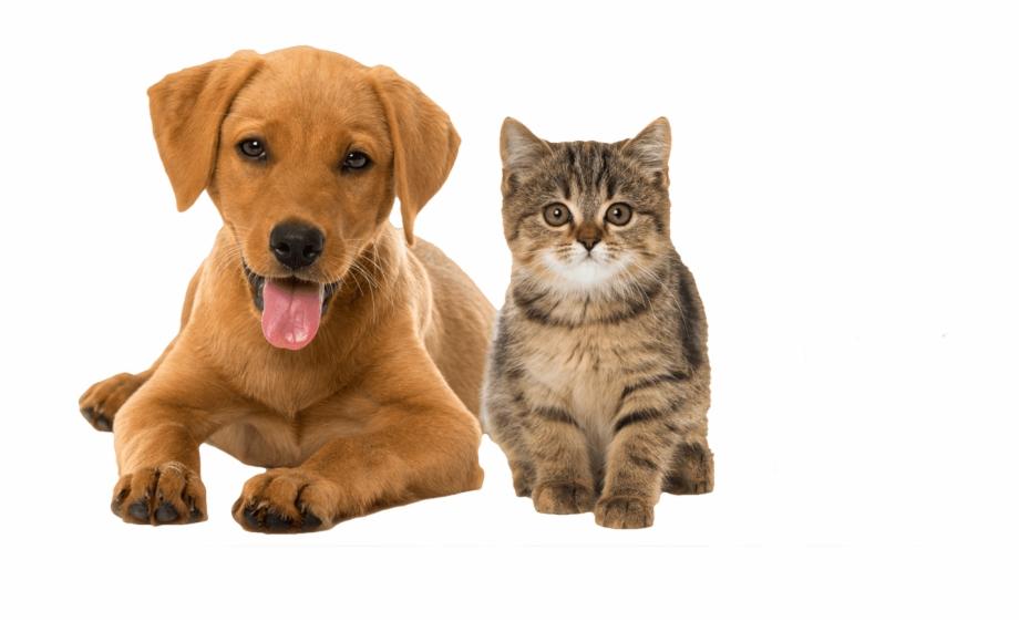 Dog Cat And Rabbit {#4186087}.