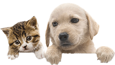Bow Wow Pet Names: Perfect Dog Name or Cat Name for your new Pet.