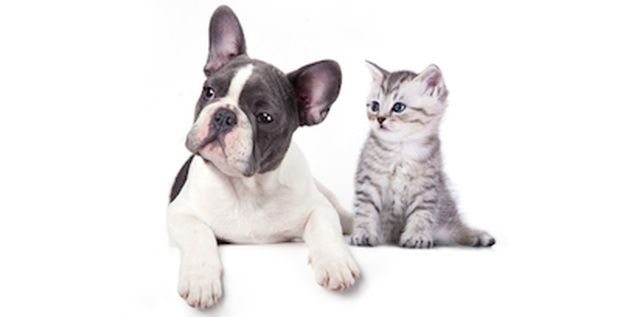 Dogs versus cats: Take the quiz!.