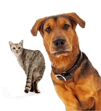 Traveling With Your Dog or Cat.