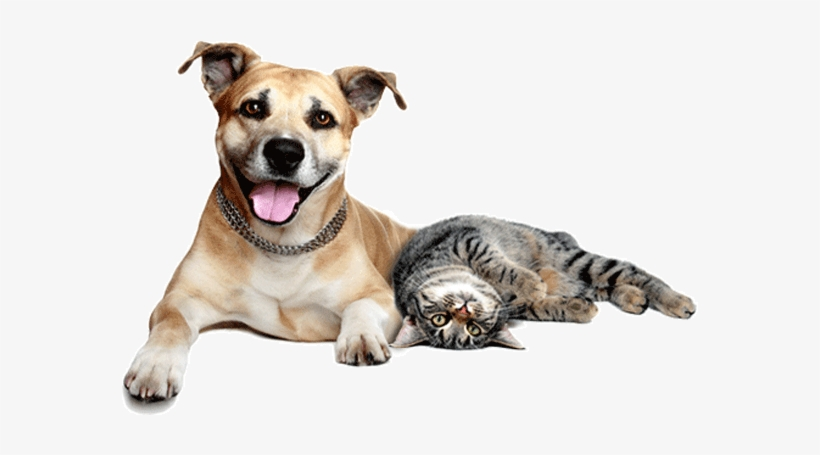 Cats And Dogs Png.