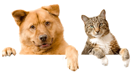 Cat and Dog transparent background.