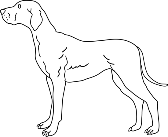Dog black and white dog pictures free download clip art on.