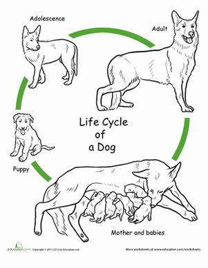 Dog life cycle clipart.