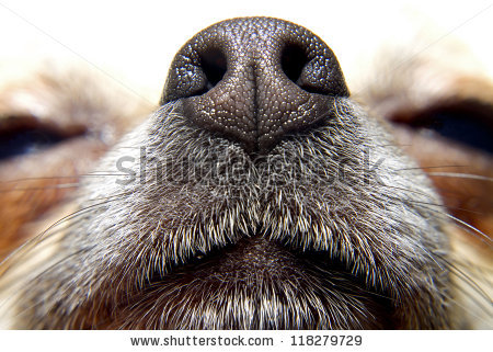 Dog Sniffing Stock Photos, Royalty.