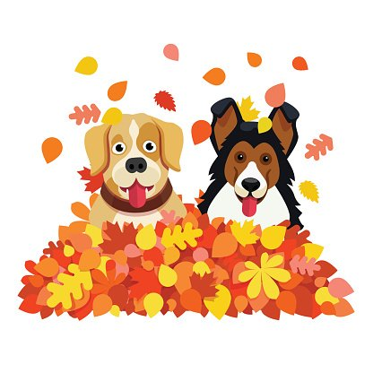 Two Dogs Playing IN AN Autumn Fallen Leafs Pile premium clipart.