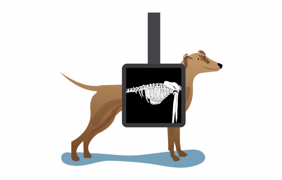 Machine To Help Save More Dogs Like Buck.