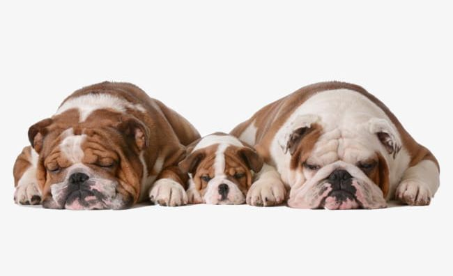 Three Cute Puppy Material PNG, Clipart, Adorable, Cute Clipart, Dog.