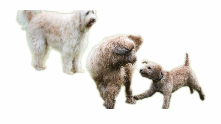 Dogs Playing Png, Transparent Png Download For Free #341497.