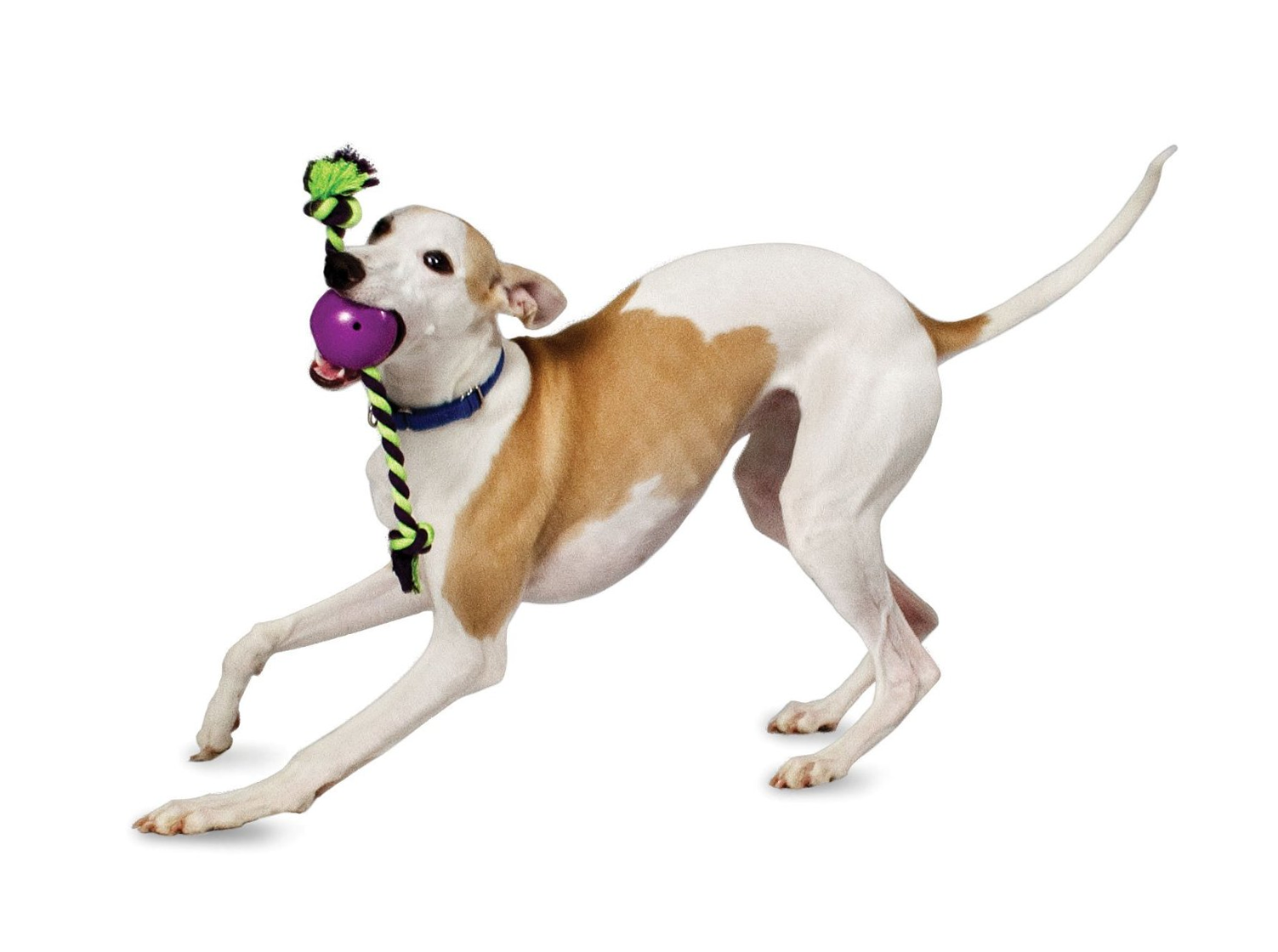 Busy Buddy Roly Rope Dog Toy.