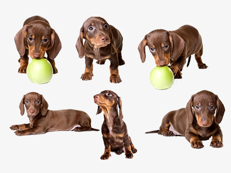 Vector Dog Playing With A Ball Of Weimar, Dog Clipart, Weimar Dogs.