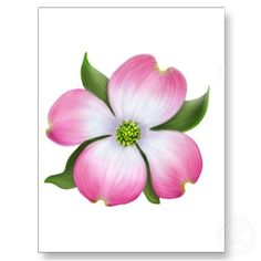 Free clipart dogwood blossoms.