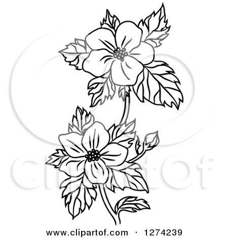 Dogwood Clipart Clipground