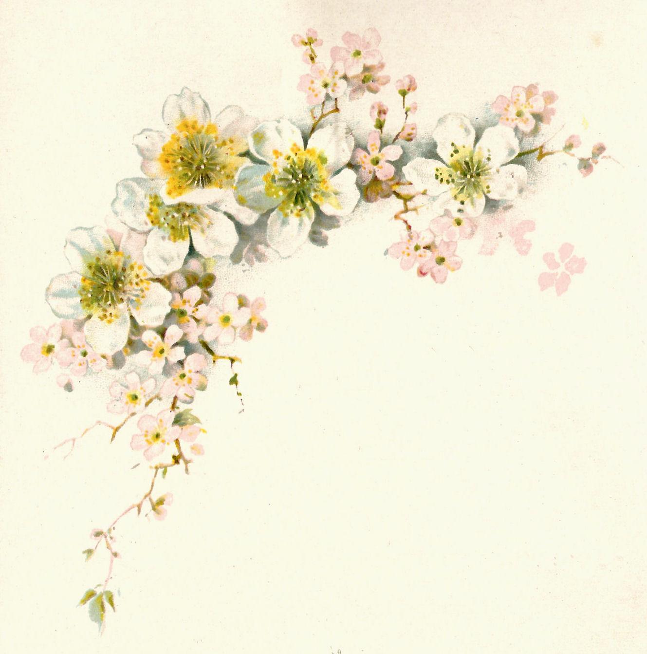 Antique Images: Free Flower Graphic: Vintage Dogwood Flower Clip Art.