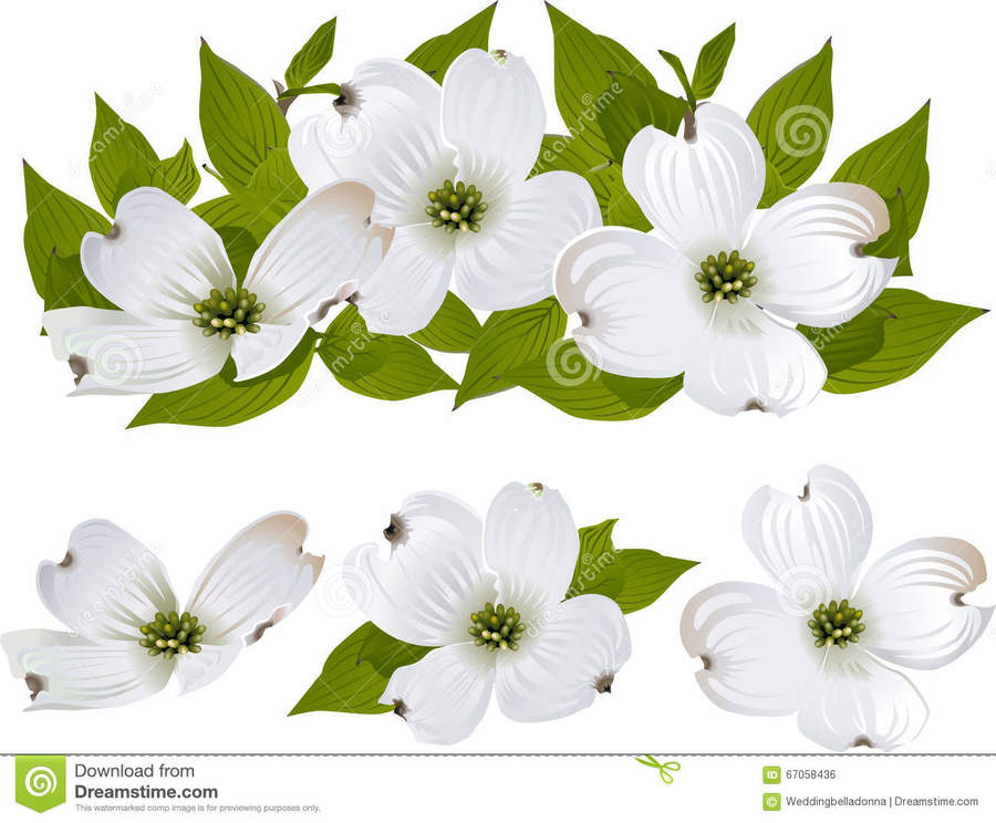 Flower, Drawing, Illustration, White, Plant png clipart free download.