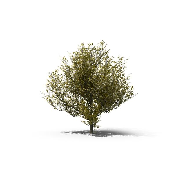 Dogwood Tree PNG Images & PSDs for Download.