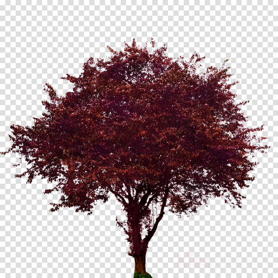 Collection of 14 free Dogwood tree png bill clipart dollar sign.