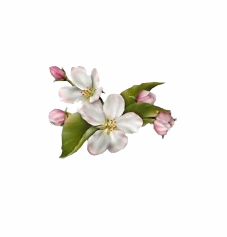 Dogwood Flower.