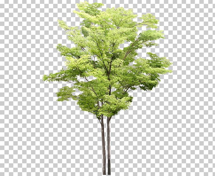 Tree Flowering Dogwood PNG, Clipart, Adobe Photoshop Elements, Agac.