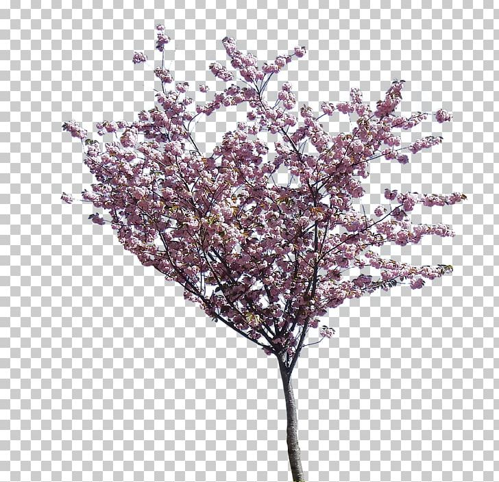 Flowering Dogwood Cherry Blossom Tree PNG, Clipart, Blossom, Branch.