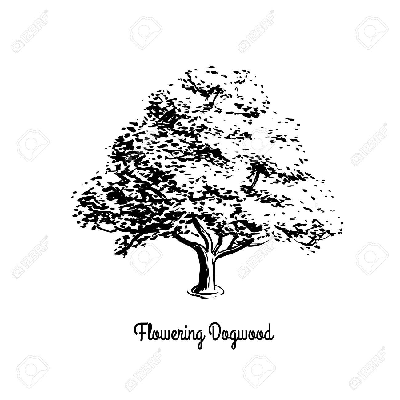 Vector sketch illustration of Flowering Dogwood. Black silhouette...